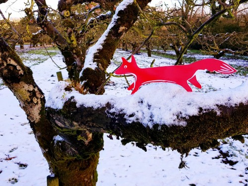Follow The Fox - Pedro hanging out in Mac Ivors Cider Co orchards - great tasting Irish cider