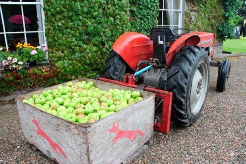 Bramley Apples Armagh